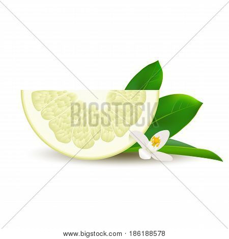 Isolated half of circle juicy yellow pomelo with white flower green leaf and shadow on white background. Realistic colored slice