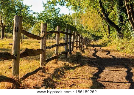 Wooden country fence along a meadow sheds shadow on a path under trees. Het Vinne Zoutleeuw Flanders Belgium Europe