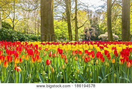 Keukemhof Romantic Blooming Gardens Landscape Lisse Holland