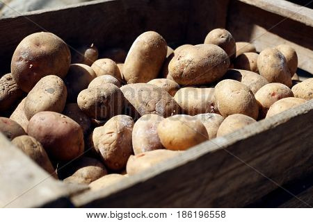Potatoes in a wooden box. Homemade potatoes