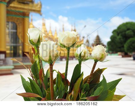 White flower (for worship the Buddha image/statue) on the Buddhism place or temple (with gold pagoda)