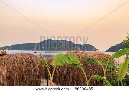 Beach bast sunshades with banana trees during sunset