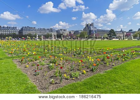 Flowers on the lawn. The Tuileries Garden a sunny day in early April. Paris France.