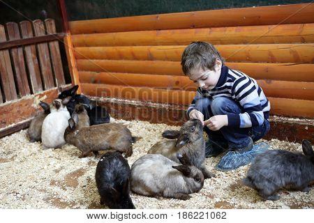 Boy feeding rabbits on the farm indoor