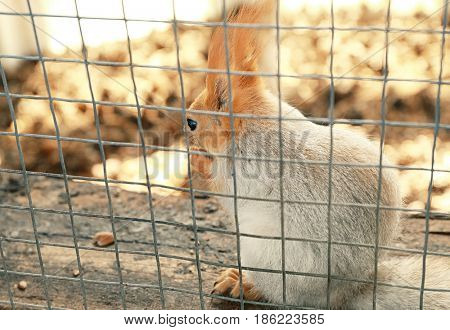 Cage with cute squirrel on farm