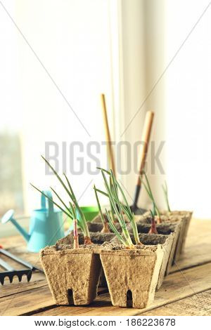 Plant cultivation with garden tools on wooden window sill