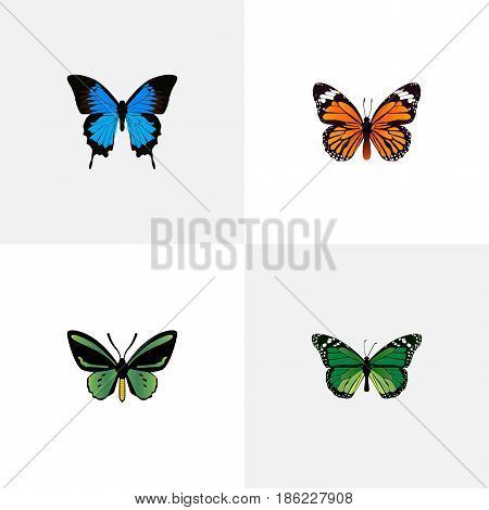 Realistic Birdwing, Tropical Moth, Monarch And Other Vector Elements. Set Of Moth Realistic Symbols Also Includes Monarch, Orange, Cypris Objects.