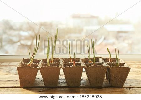 Plant cultivation on wooden window sill