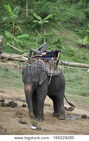 the mahout asleep on his elephant during a vacation in Thailand