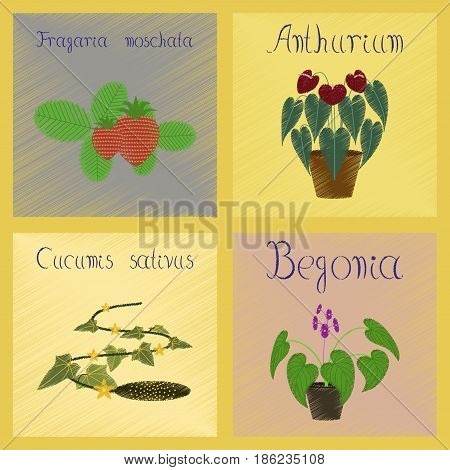 assembly flat shading style Illustrations of Cucumis Anthurium Fragaria Begonia