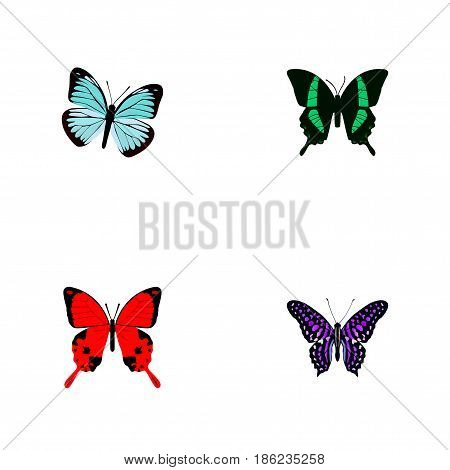 Realistic Lexias, Beauty Fly, Polyommatus Icarus And Other Vector Elements. Set Of Moth Realistic Symbols Also Includes Julia, Fly, Sky Objects.
