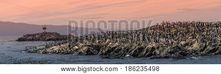 Colony Of King Cormorants Beagle Channel, Patagonia