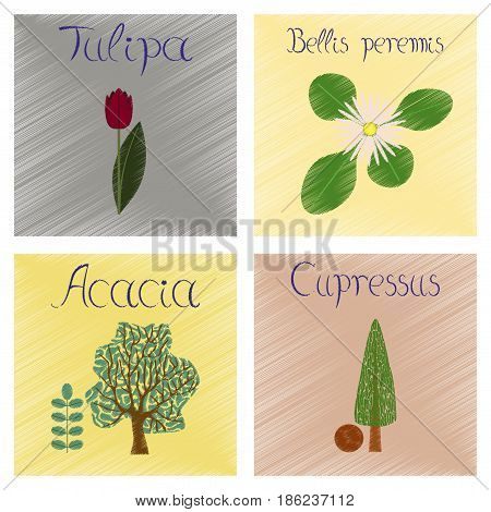 assembly flat shading style Illustrations of Cupressus Acacia Bellis Tulipa