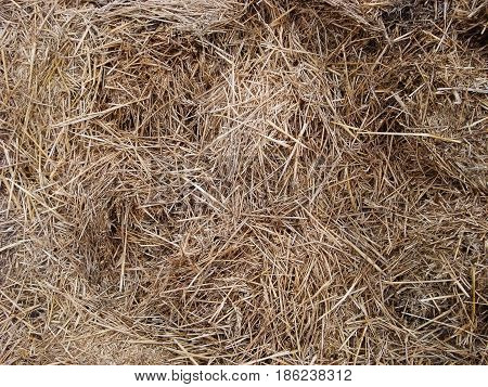 A large haystack stocks from summer to winter for animals
