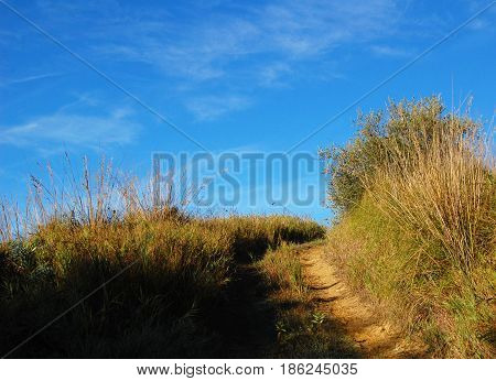 Country road on the hill. Pathway in the grass fields. Trekking in Italy. Dry plants. Sunny autumn day. Aged photo. Walkway through the meadows.