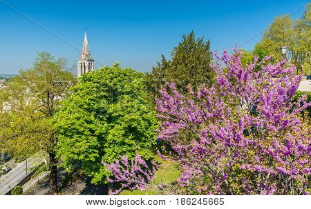 Spring tree blossom in Angouleme - France, Charente
