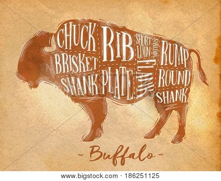 Poster buffalo cutting scheme lettering chuck brisket shank rib plate flank sirloin shortloin rump round shank in retro style drawing craft background