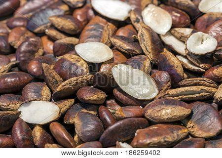 Roasted wild almond seeds (kayu seeds)- Irvingia Malayana