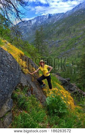 Woman hiker in mountains among yellow wildflowers in spring. Central Cascade Mountains. Seattle. Leavenworth. Washington. The United States.