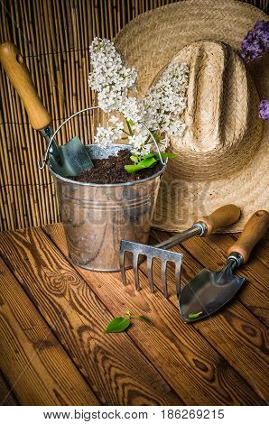 Gardening tools and a branch of a blossoming white lilac on a wooden surface
