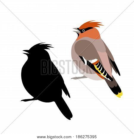 waxwings vector illustration style Flat black silhouette