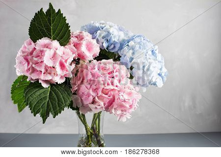 hydrangeas in a glass vase. Hydrangeas produce larger mopheads made up of clusters of small flowers from Summer through Autumn