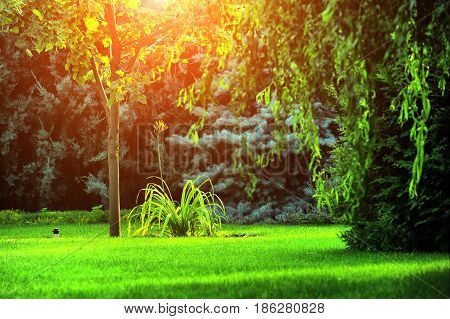 Beautiful Landscaping With Beautiful Plants