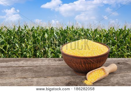 uncooked cornmeal porridge in bowl with scoop on wooden table with green field on the background. Agriculture and harvest concept. Maize with maize field background