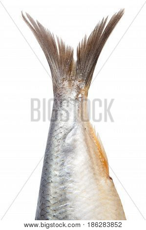 Tail fish herring isolated on white background