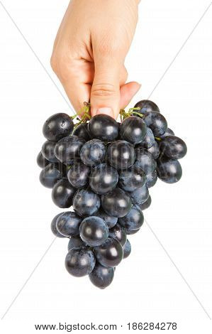 Grapes in a female hand isolated on the white background