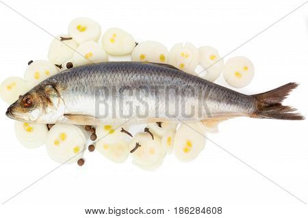 Herring with onions and spices on the white