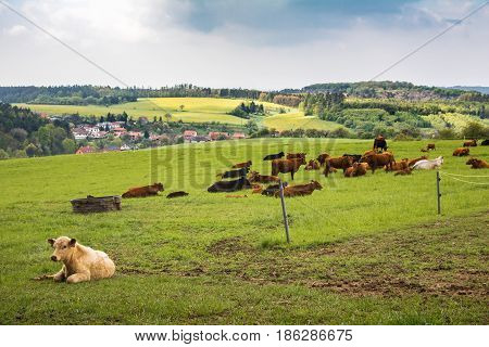 Cows On Green Pasture Under Cloudy Sky