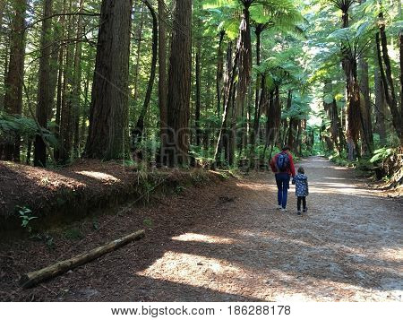 Mother and daughter (Age 35 and 03) travel and hikes in Giant redwood forests in Rotorua North Island New Zealand.