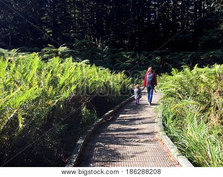 Mother and daughter (Age 35 and 03) travel and hikes in Giant redwoods forests in Rotorua North Island New Zealand.