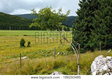 a bent tree close to the mountains