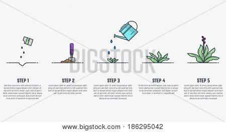 Growing plant stages. Seeds watering can sprout and grown plant. House plant in flowerpot. Line style flat illustration of house plant with leaves in pot. Thin lines. Grow process.