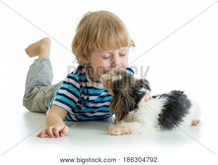 Child little boy kissing puppy dog, isolated on white background