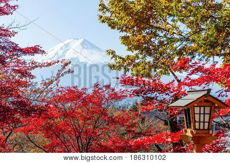 Maple tree, japanese temple and mountain Fuji
