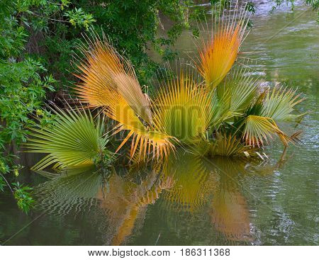Colorful palm fronds dip into a lake and are reflected on the water's surface.