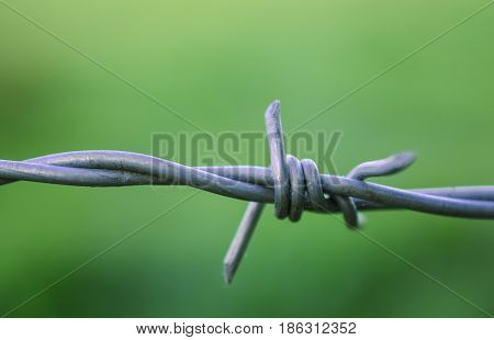 Sharp Bard close up on wire fence