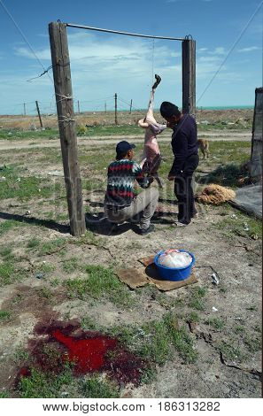 Area 38.(Ploshadka 38 ru.)People slaughtering a sheep on ruins space communication center.Sary Shagan.Former anti-ballistic missile testing range.Kazakhstan.May 6, 2017.Sary Shagan.Kazakhstan