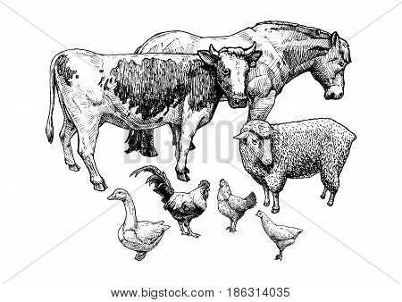 Vector hand drawn illustration of farm animals in vintage engraved style. Draft horse cattle sheep goose and hen.