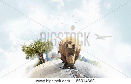 Rhino on asphalt road