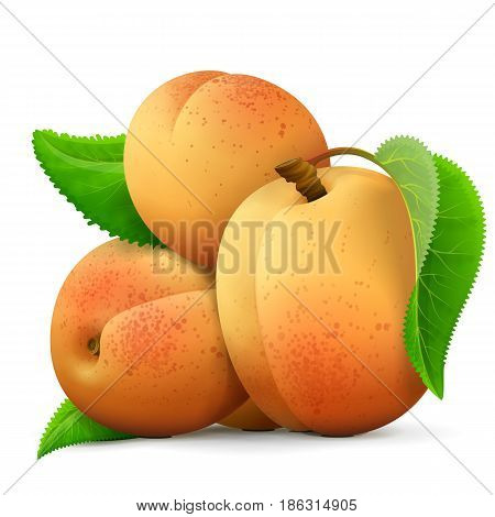 Heap of fresh apricots fruit close up. Few raw apricots with leaf isolated on white background. Best vector illustration about fruits agriculture cooking food gastronomy etc