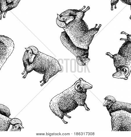 Seamless pattern with sheep. Vector illustration in vintage engraved style on white background.