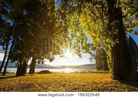 forest trees backlit by golden sunlight near the lake