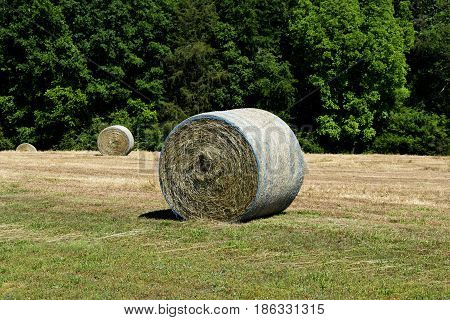 Rolled bales of hay at farm rural Georgia, USA.