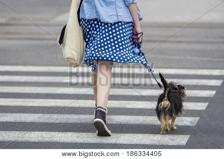 Young woman with dog walking in the city