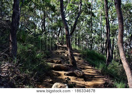 Forest Way At Ngungun Glass House Mountains National Park