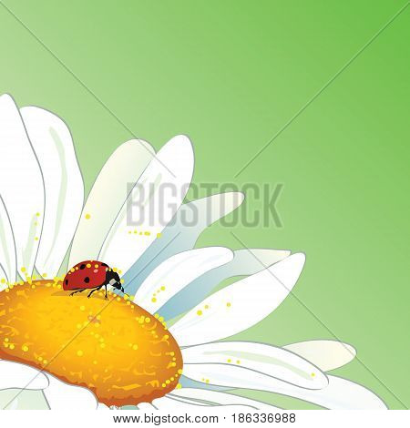 vector background with daisy and ladybird for corner design
